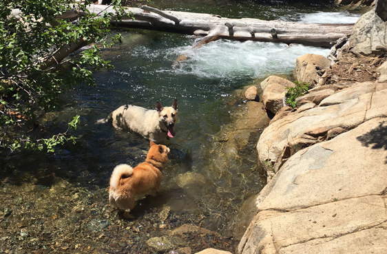 Desolation Wilderness Backpacking - dogs and stream