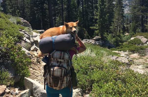 Desolation Wilderness backpacking Shiba-inu carry